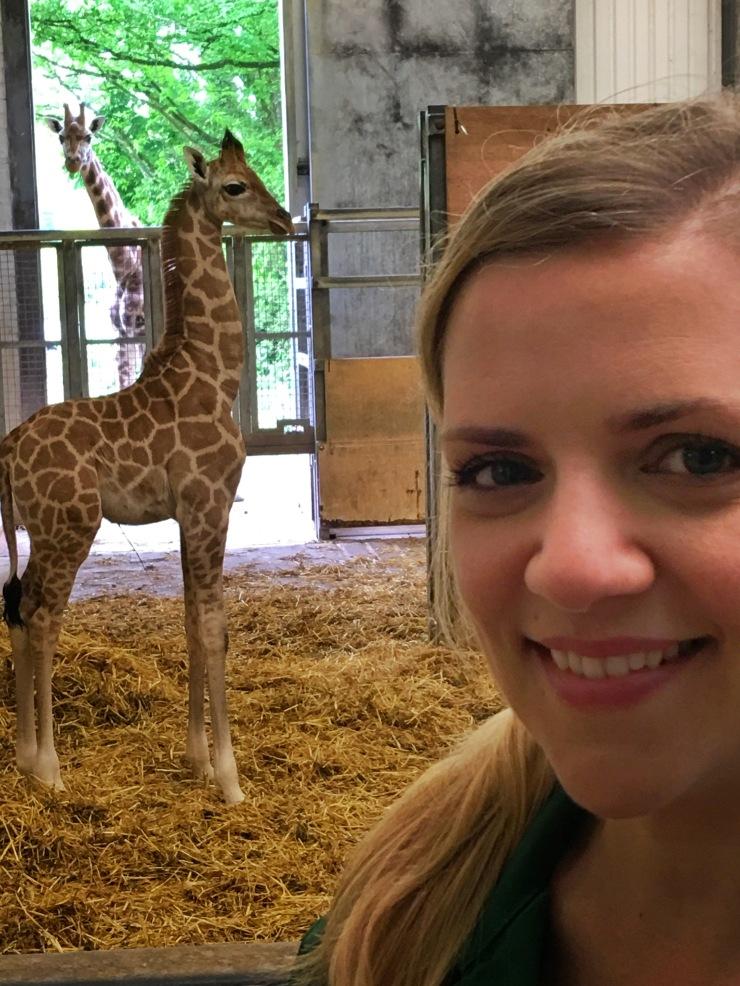 Conociendo a la nueva integrante de la familia de las jirafas