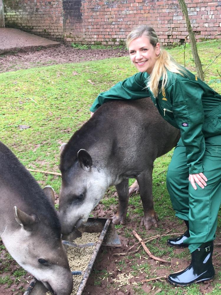 Con los tapires del zoo de Paignton